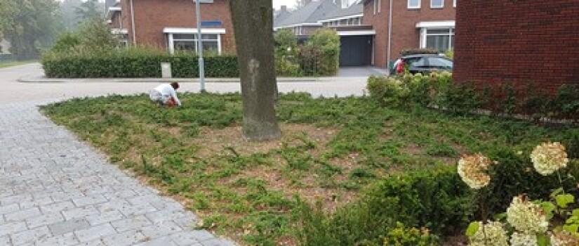 NW-Prinsenbeek-Dennenweg_(3)