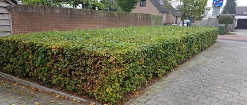 NW-Prinsenbeek-Leliehof-OB_(2)